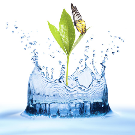 Green Leaf with Water Splash and Butterfly photo