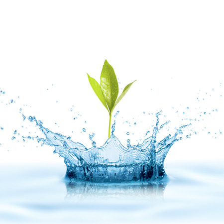 pure water: Green Leaf with Water Splash