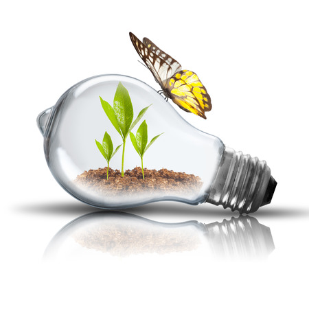 Light Bulb with soil and green plant sprout inside and Butterfly photo