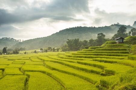 Rice Field in North of Thailand photo