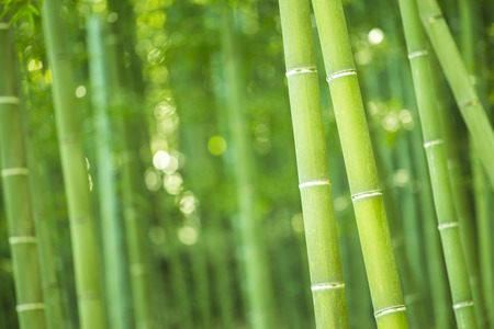Bamboo Forest Stock fotó