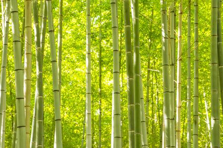 Bamboo Forest Foto de archivo