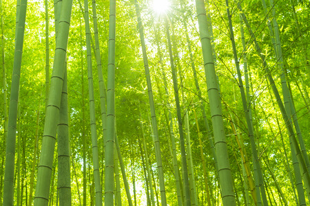 bamboo leaves: Bamboo Forest Stock Photo
