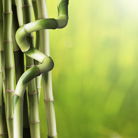 fengshui: Close up of Bamboo