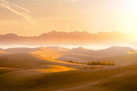 Desert Sand Dune Standard-Bild