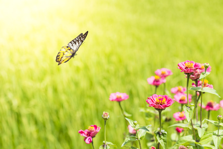 Pink Flower With Butterfly Photo