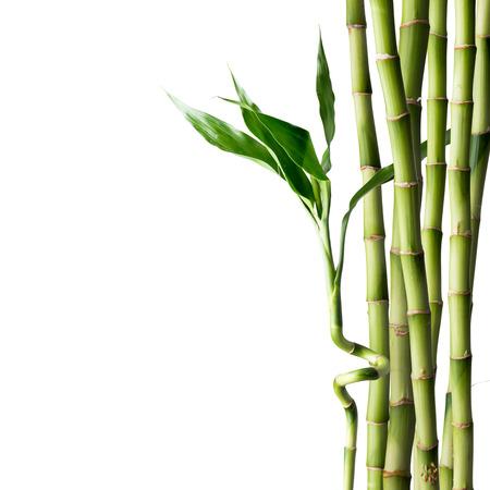 Fresh bamboo Standard-Bild