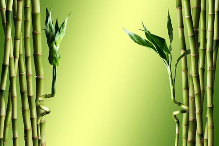 fengshui: Fresh bamboo Stock Photo