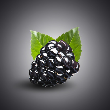 Blackberry Isolate on Black Background photo