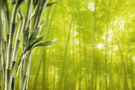 竹林の背景を持つ竹