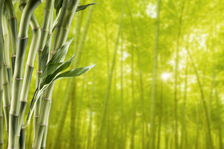 Bamboo With Bamboo Forest Background Stock Photo - 44842452