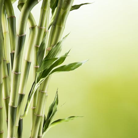 zen attitude: Bamboo  Banque d'images