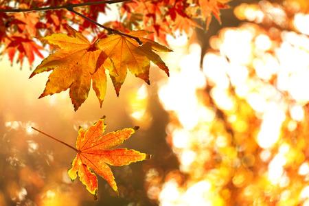 秋を葉します。 写真素材