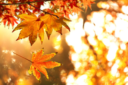 Autumn Leafs Standard-Bild