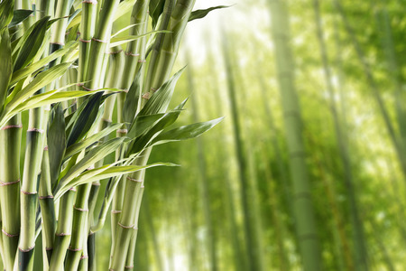 Bamboo With Bamboo Forest Background 版權商用圖片 - 44842057