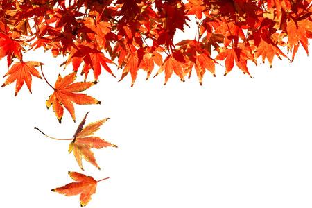autumn leafs: Autumn Leafs Falling Stock Photo