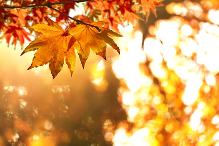 fall landscape: Autumn Leafs Stock Photo