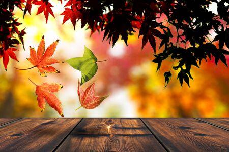 Autumn Leaf Falling. Autumn Or Fall Season