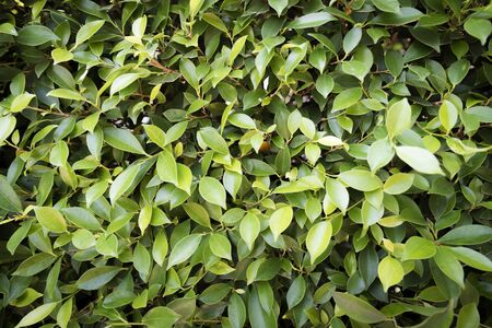 assort: leaves texture,leaves background
