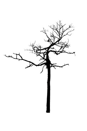 dead tree trunk silhouette isolated on white background for spooky or halloween.