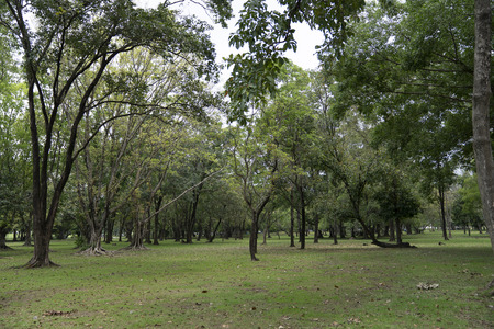 natural green fresh park. Archivio Fotografico - 111266479