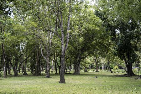 natural green fresh park.