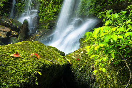 natural water fall in national park with high moisture on stone have moss and red maple.relax and concentrate concept. Stock Photo