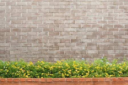 brick and flower photo
