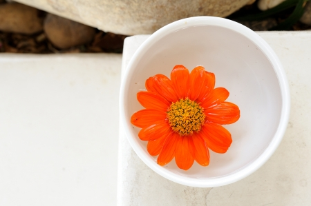 flowers for spa and aromatherapy