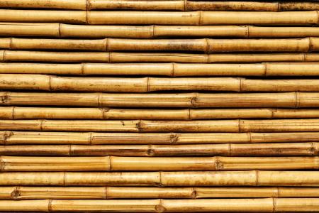 bamboo fence Stock Photo - 16677448