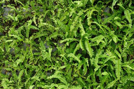 Fern plants cover the ground