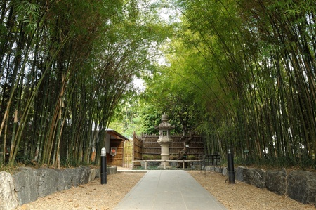 Asian Bamboo forest photo