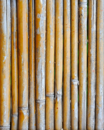 bamboo background Stock Photo - 16677444