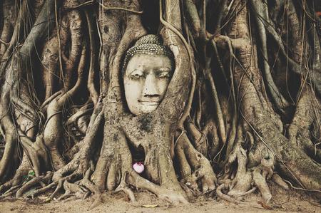 cabeza de buda: Cabeza de Buda en Ayuttaya Foto de archivo