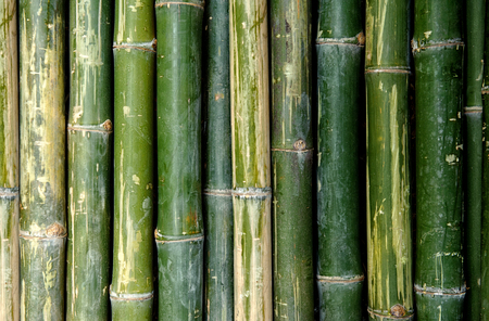 big bamboo fence