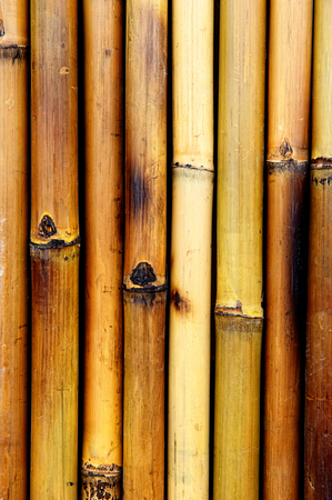 bamboo burnt