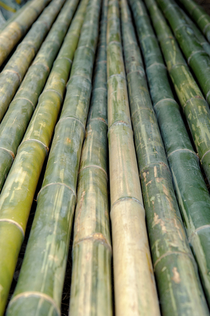 Bamboo stalks background