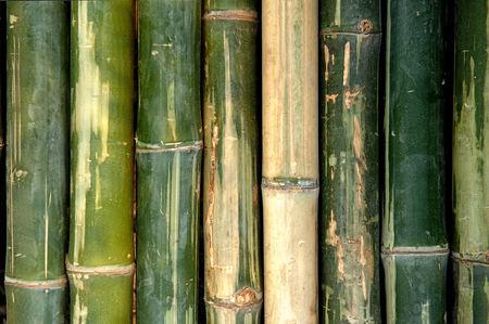 big bamboo fence background Stock Photo
