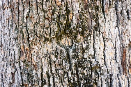 bark texture: Highly detailed tree bark texture Stock Photo
