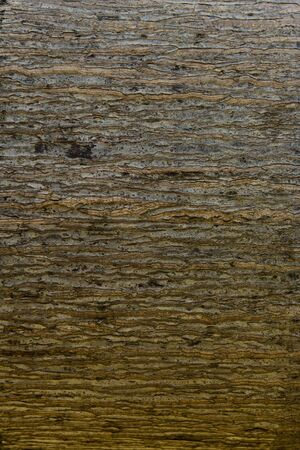 bark palm tree: Palm tree. Background texture of tree bark