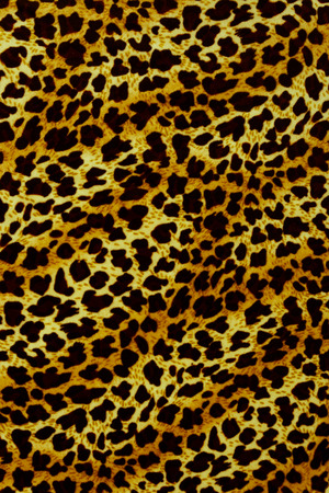 gepard: Leopard background