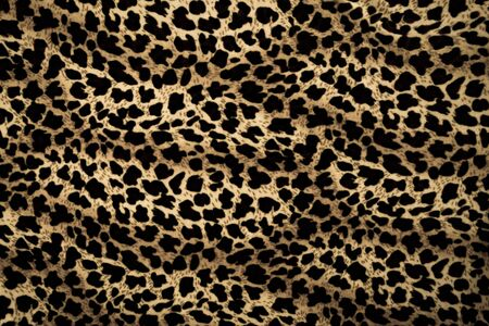 chetah: Leopard background