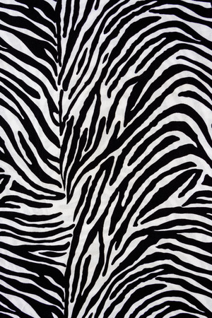 print design: Texture fabric of Zebra for background Stock Photo