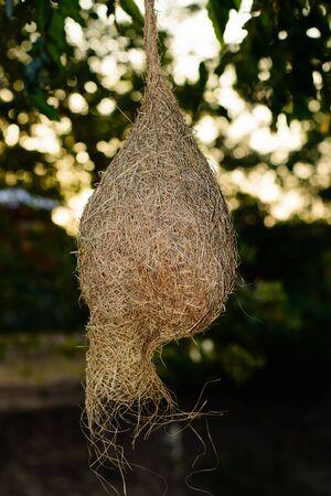 nests: skylark nests