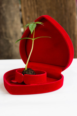 plantlet: The plants grow from seeds placed on the heart to tell the love tree and the world