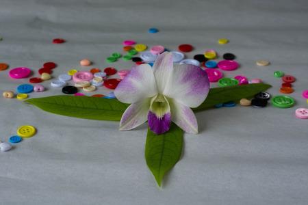 aphrodite: white Phalaenopsis aphrodite on paper Stock Photo