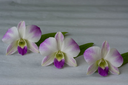 aphrodite: blanca Phalaenopsis aphrodite en el papel