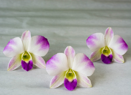 afrodita: blanca Phalaenopsis aphrodite en el papel