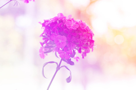 small flower: Vintage sweet color of small flower
