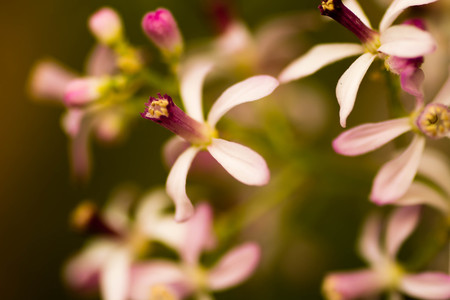 small purple flower: Small purple flower with blur background Stock Photo